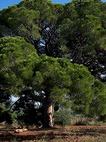 Antea By Erro In Pinos - Photo 1